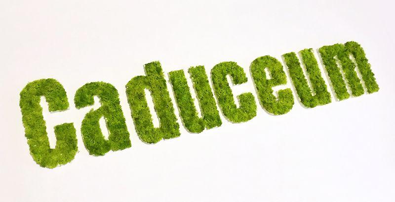 Lettre en mousse végétale stabilisée - Logo végétal en lettres découpées